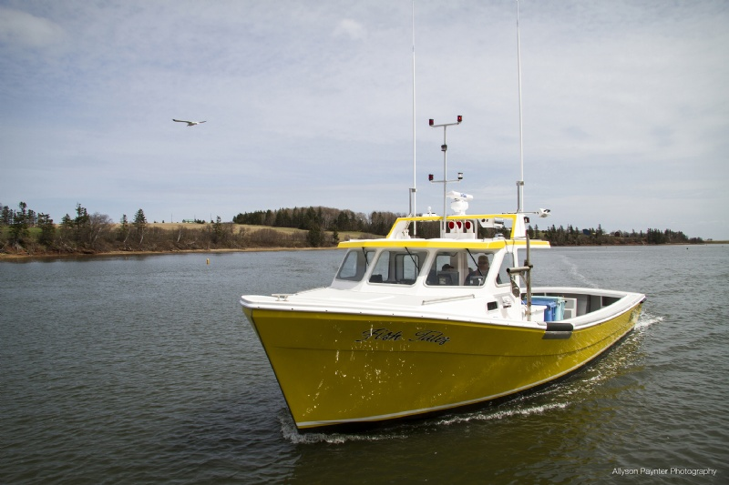 Provincial boat and marine view the latest boats for for Fish tale boats